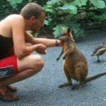 Endangered Species Australia