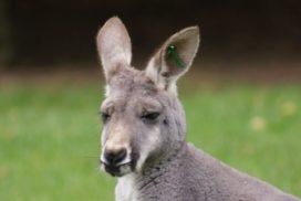 Study Australia - Study in Australia